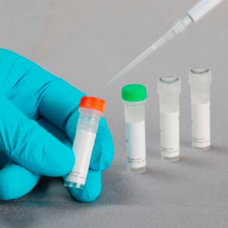 FastGene Restriction Enzyme, Enzima de restricción Not I (500 U)