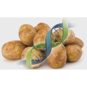 Anticuerpo conjugado, virus de patata X