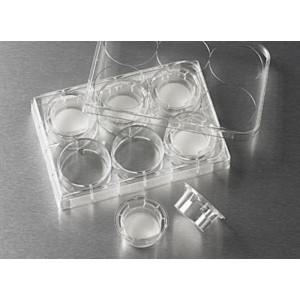 Inserto de membrana Transwell de policarbonato, 24 mm, poro 0,4 µm, estéril, 24 Uds.