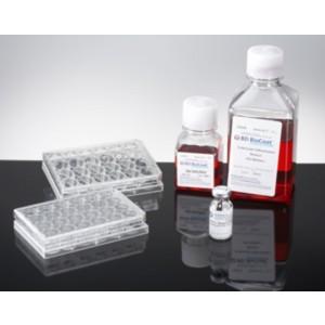 Kit de diferenciación de epitelio intestinal