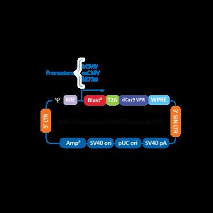 Reactivos Expresión Génica -Edit-R CRISPRa Lentiviral hCMV-Blast-dCas9-VPR Plasmid DNA