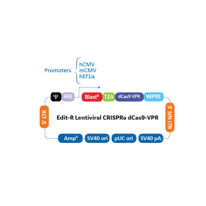 Reactivos Expresión Génica -Edit-R CRISPRa Lentiviral mCMV-Blast-dCas9-VPR Plasmid DNA