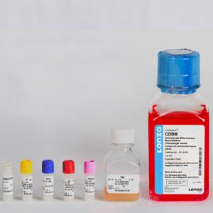SFM - Medio especial diferenciación de condrocitos CDM BulletKit, contiene medio basal y suplementos, 1 kit