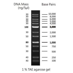 FastGene Marcador de peso molecular de ADN 1 kb (50 µg _ 500 µl)
