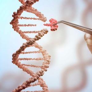Enzima de ligación de ADN Ligasa T4 FastGene (20.000 U)