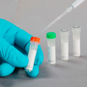 FastGene Restriction Enzyme, Enzima de restricción NgoM IV (1000 U)