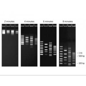 Marcador de peso molecular FlashGel DNA Marker 100 - 4000 bp (150 µl)