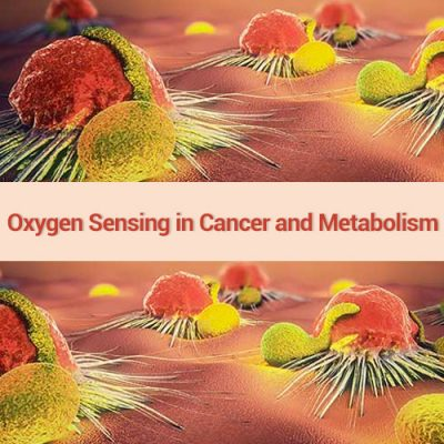 Seminario ON LINE:  Oxygen Sensing in Cancer and Metabolism