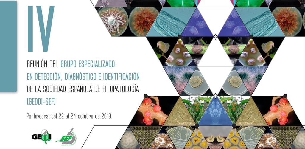 IV Reunión del GEDDI-SEF (Pontevedra 2019)