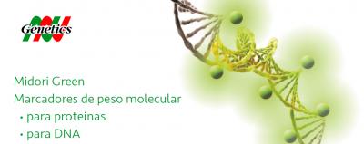 Marcadores de peso molecular y dyes flurescentes (Midori Green) - Nippon