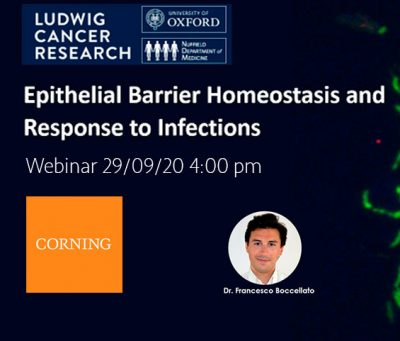 Epithelial Barrier Homeostasis and Response to Infections