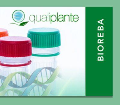 Alianza estratégica Bioreba y Qualiplante