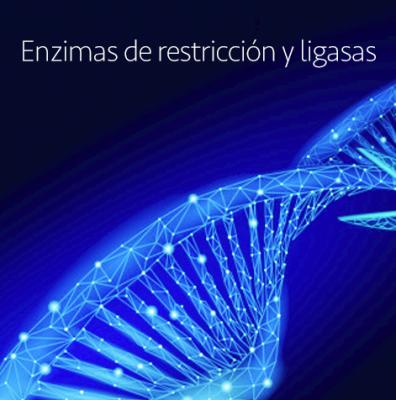 Enzimas de restricción y ligasas de Nippon Genetics